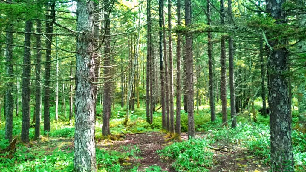 森のアロマ_ハッピーアロマライフ