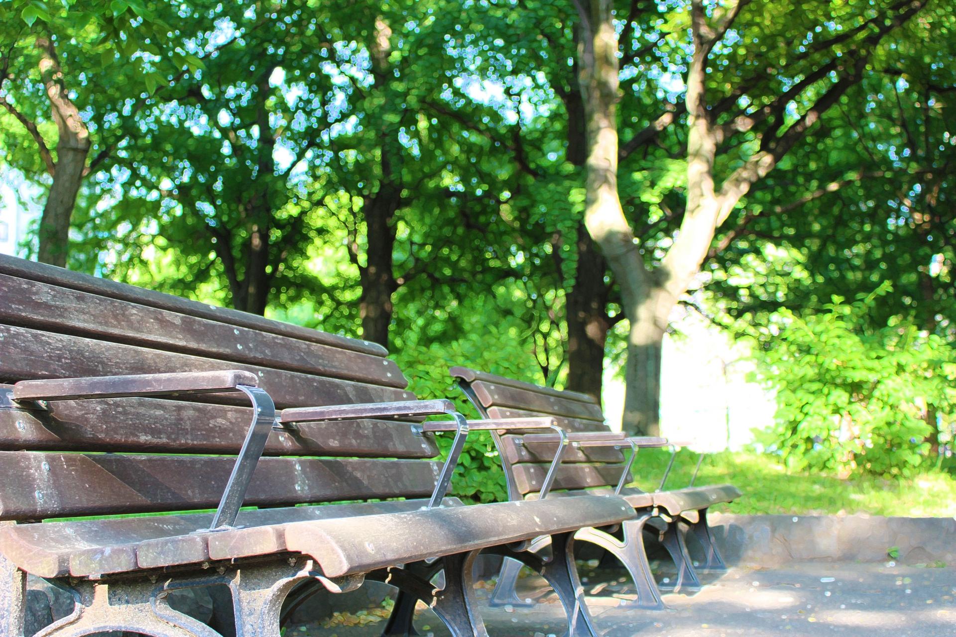 木漏れ日ベンチ